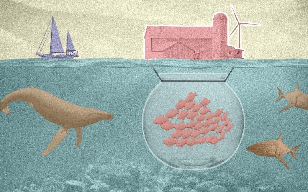 Meer uit de zee met duurzame kweekvis