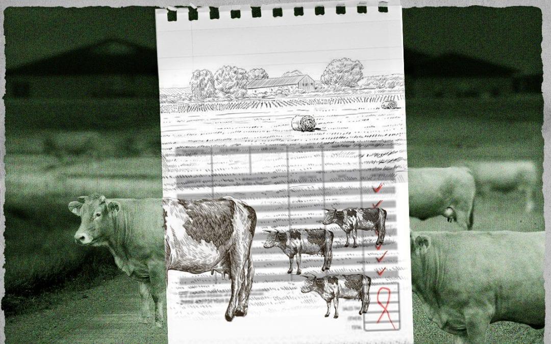 Kalfjesfraude wijst op systeemfout in onze landbouw