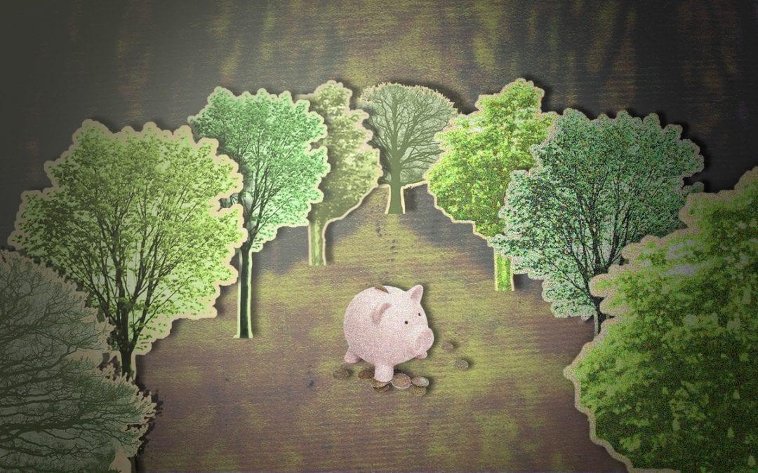 Peter kocht een heilig bos voor 8500 euro