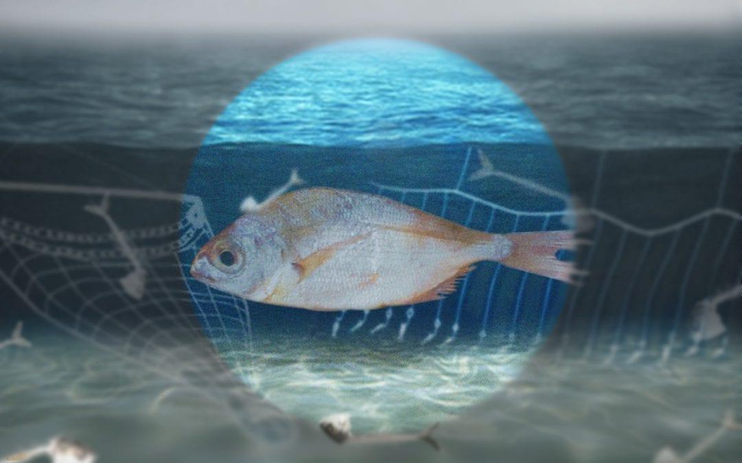 De pulsvisserij-discussie voorbij