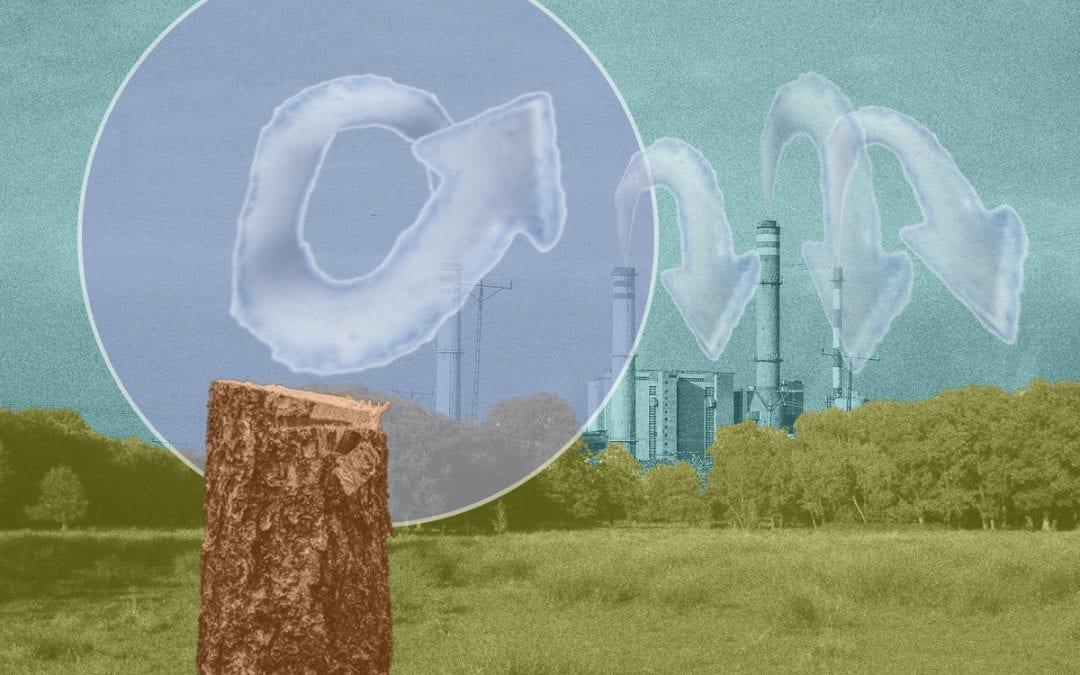 Vier dingen die je moet weten over biomassa