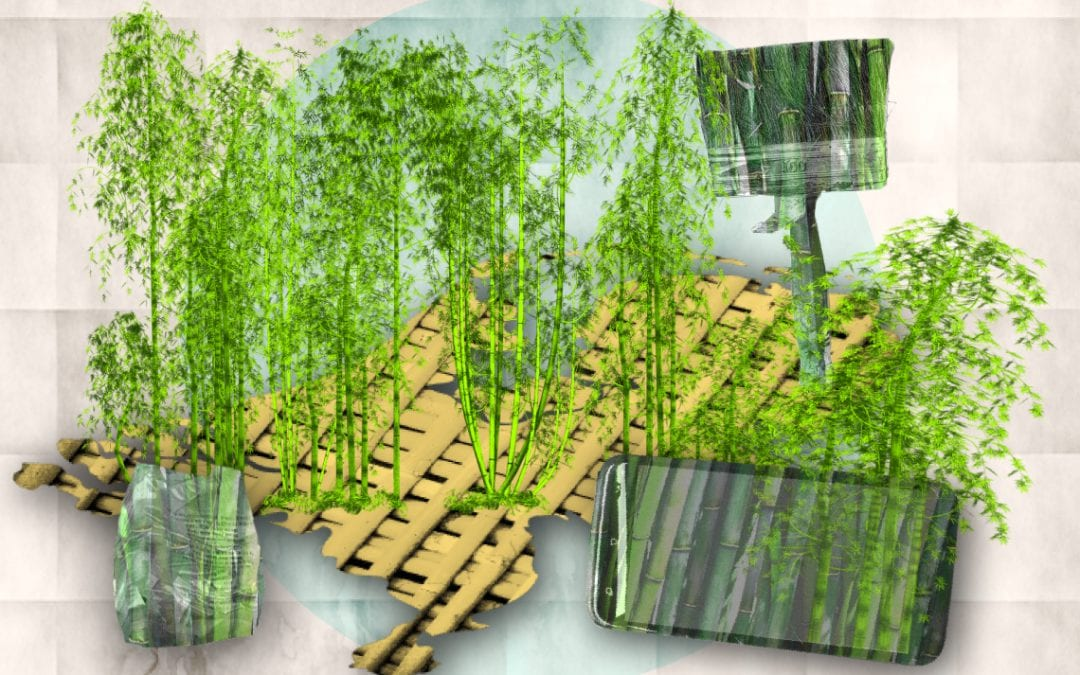 Wat je met bamboe maken kan
