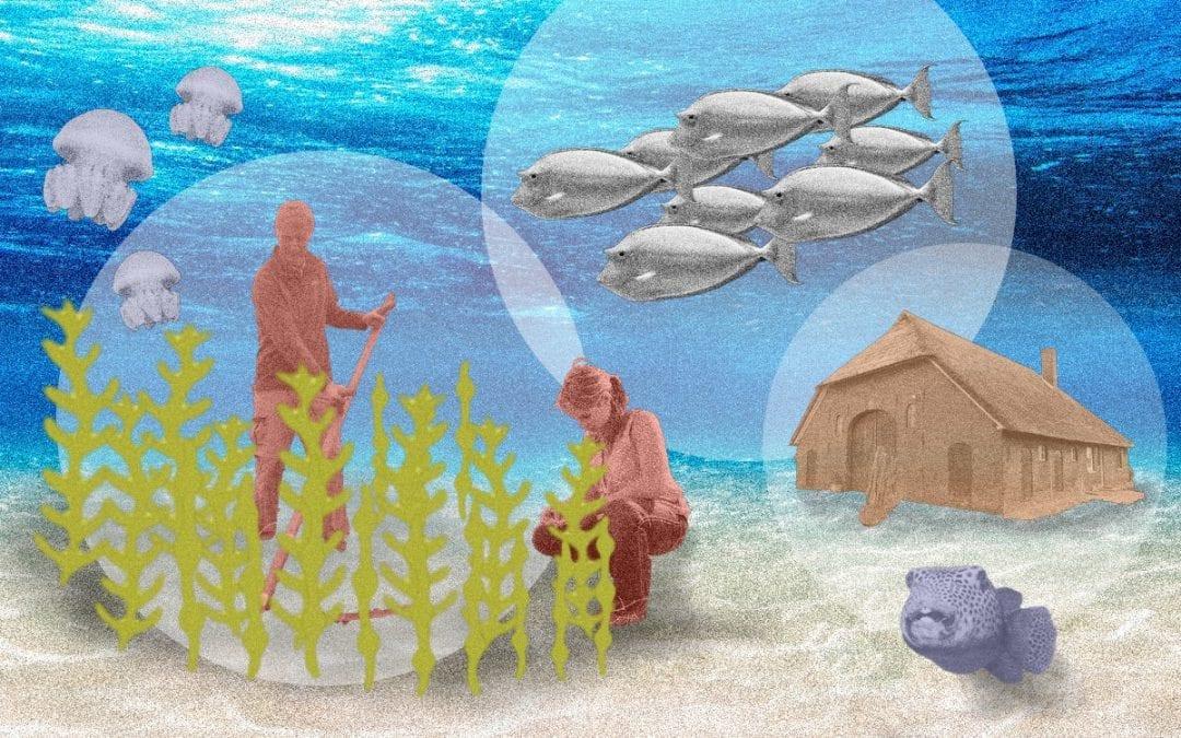 Dit is waarom zeeboerderijen nodig zijn